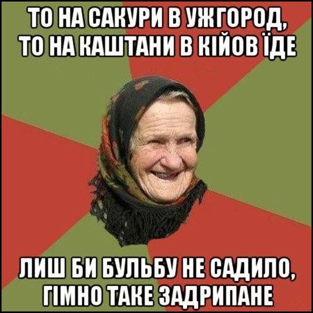 Мем бабця з села. То на сакури в Ужгород, то на каштани в Кійов їде - лиш би бульбу не садило, гімно таке задрипане