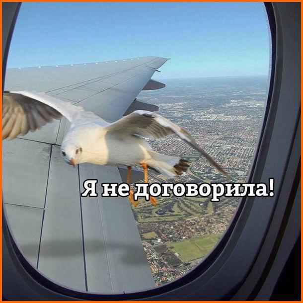 Прикол про чайку. В літаку, що летить, поряд з ілюмінатором летить чайка і каже: - Я ще не договорила!