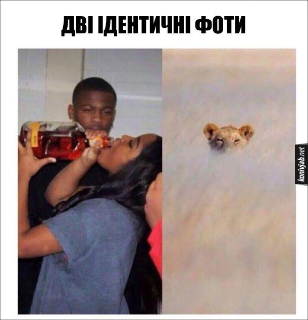 Жарт про хлопця і п'яну дівчину. Дві ідентичні фоти. Перша світлина: Хлопець поглядає, як дівчина п'є алкоголь з пляшки. Друга світлина: Лев (чи левиця), що вичікує свою здобич в густій траві. На обох світлинах це хижак в очікуванні здобичі
