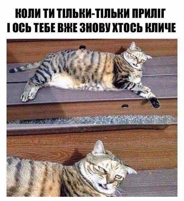 Прикольний кіт. Коли ти тільки-тільки приліг і ось тебе вже знову хтось кличе