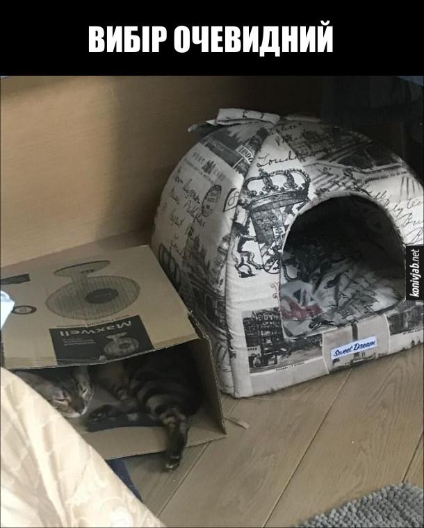 Де люблять спати коти. Поряд поставили спеціальне ліжечко і звичайну картонну коробку. Кіт ліг в коробку - вибір очевидний
