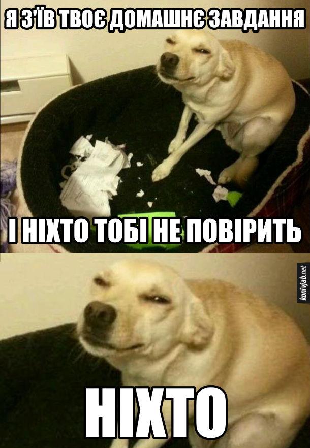 Прикол Підступний собака погриз зошити і хитро поглядає. - Я з'їв твоє домашнє завдання. І ніхто тобі не повірить. Ніхто