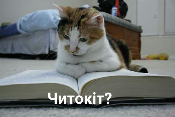 Прикол Кіт читає. Читокіт? Словесний каламбур