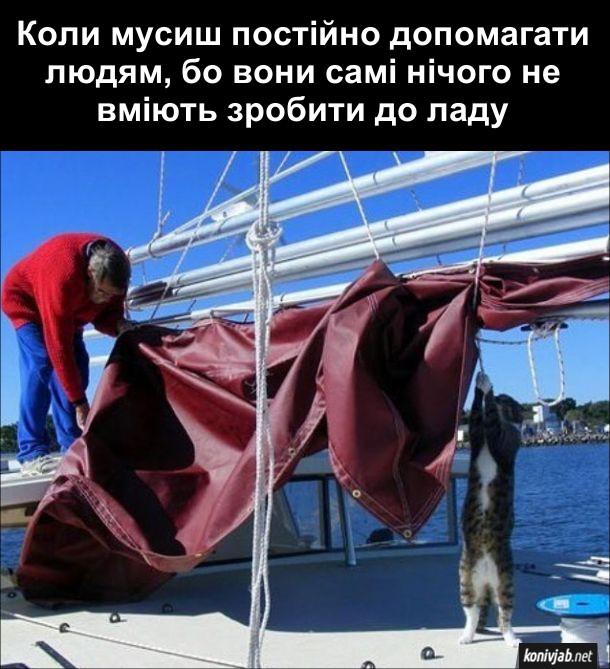 Кіт на яхті. Коли мусиш постійно допомагати людям, бо вони самі нічого не вміють зробити до ладу - гірка котяча доля.