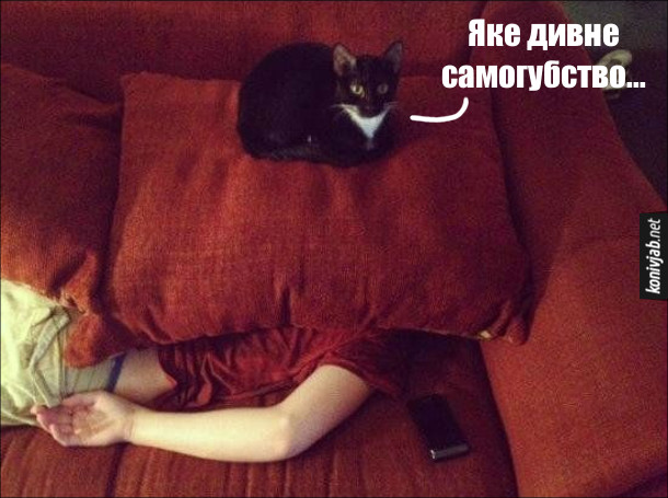 Гумор про кота. Кіт сидить на подушці, під якою лежить чоловік. Кіт: - Яке дивне самогубство