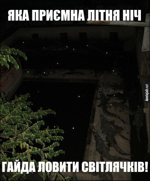 Прикол Світлячки. Яка приємна літня ніч. Гайда ловити світлячків. Але вогники в темряві це не світляки, а виблискують очі крокодилів