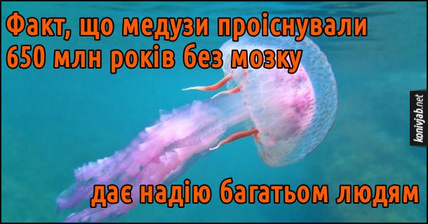 Анекдот про медуз. Факт, що медузи проіснували 650 млн років без мозку, дає надію багатьом людям