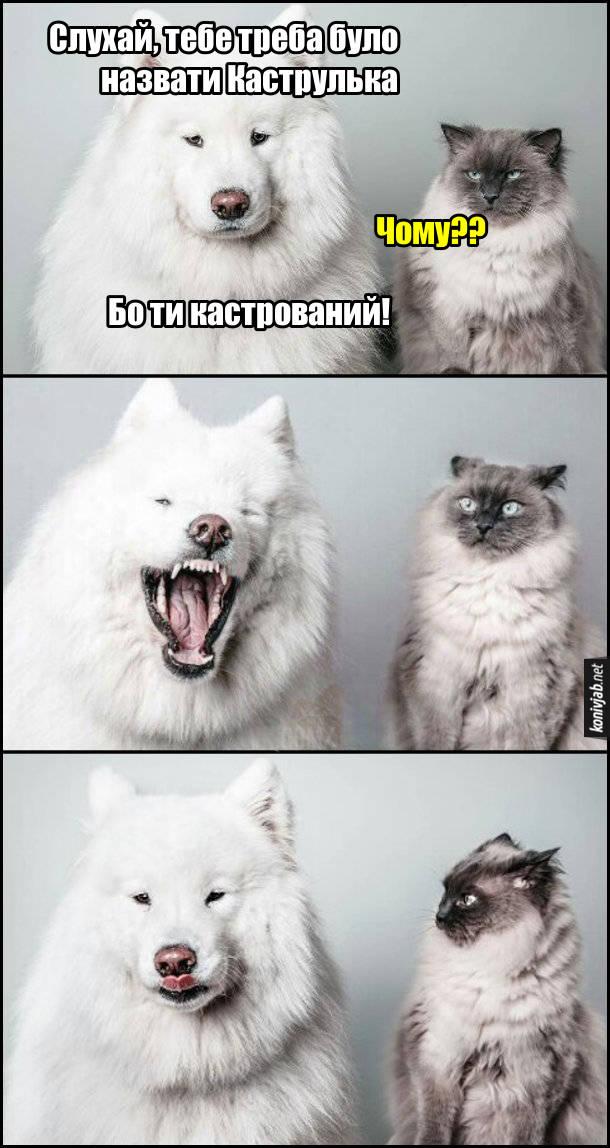 Мем Собака і кіт. Собака: - Слухай, тебе треба було назвати Каструлька. Кіт: - Чому?? Собака: - Бо ти кастрований!