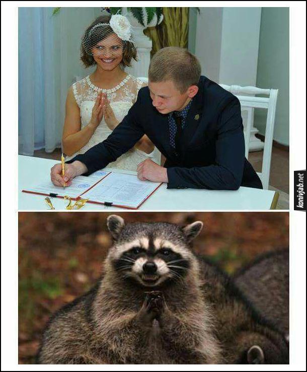 Смішне фото з РАГСу. На першому фото наречений в РАГСі підписує документ про шлюб, а наречена хижо усміхається. На другому фото - єнот з подібною хижою усмішкою