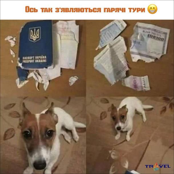 Як з'являються гарячі тури. Пес погриз закордонний паспорт і візу. Ось так з'являються гарячі тури