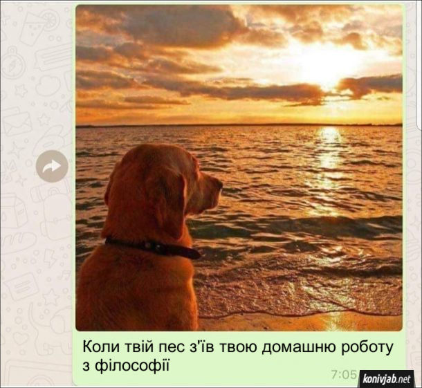 Коли твій пес з'їв твою домашню роботу з філософії - сидить на березі і філософськи дивиться на захід сонця