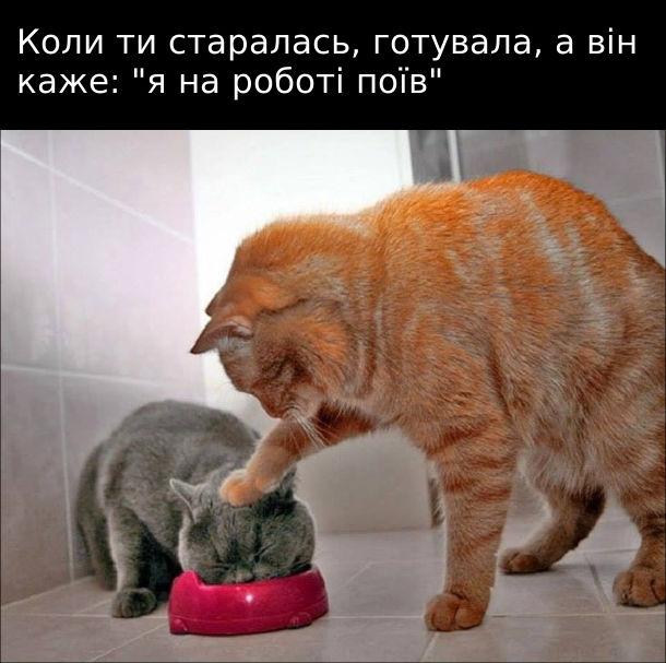 """Прикол Кицька і кіт. Коли ти старалась, готувала, а він каже: """"я на роботі поїв"""". Кицька ніби лапою притискає голову кота до тарілки з їжею"""