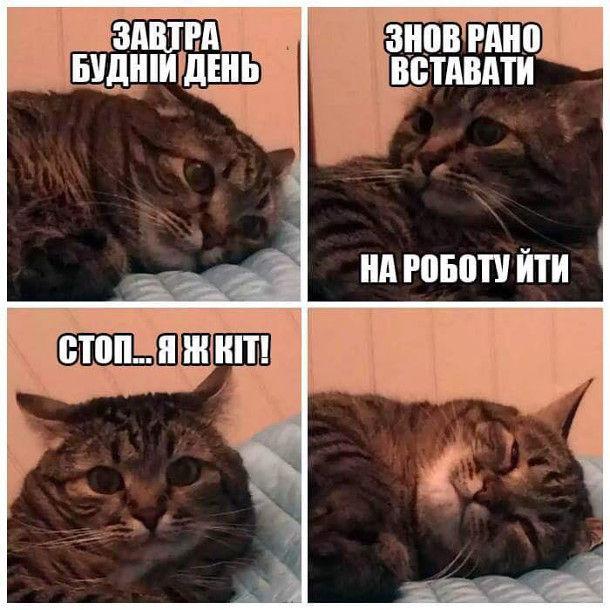 Прикол Про що думає кіт. Кіт лежит і думає: - Завтра будній день, знов рано вставати, на роботу йти. Стоп... Я ж кіт! І кіт ліг спати далі
