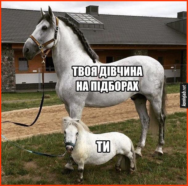 Прикол Дівчина вища. Твоя дівчина на підборах - великий кінь. Ти - маленький поні