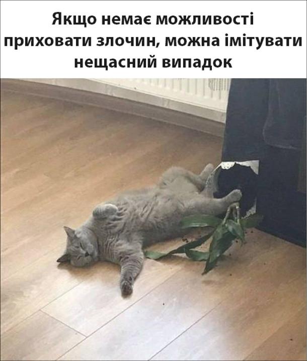 Прикол Кіт нашкодив. Якщо немає можливості приховати злочин, можна імітувати нещасний випадок. Біля скинутого вазона лежить кіт