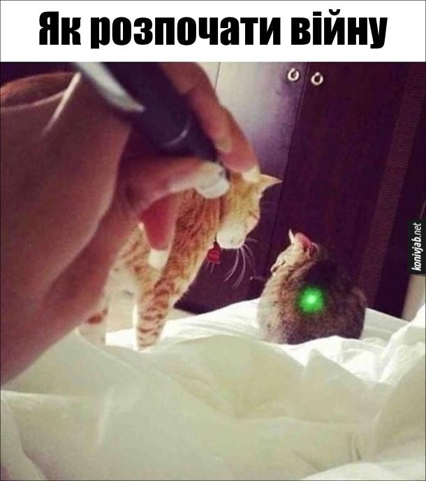 Коти і промінь. Як розпочати війну - направити лазерний промінчик на спину кота, щоб це побачив інший кіт
