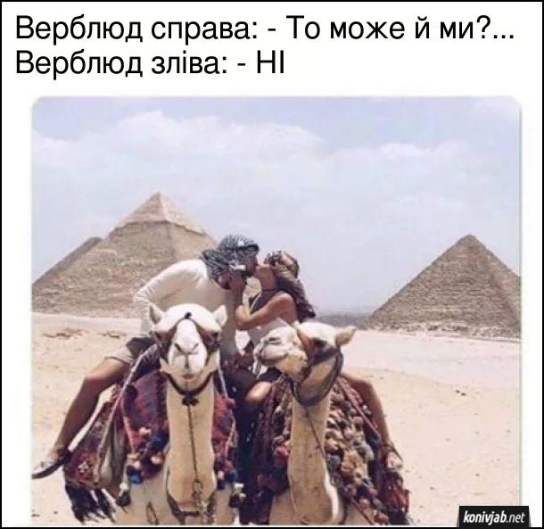 Жарт про верблюдів. Вершник і вершниця на верблюдах цілуються на тлі пірамід. Верблюд справа: - То може й ми?... Верблюд зліва: - НІ