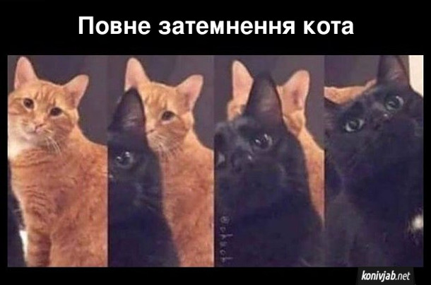Прикол про двох котів. Повне затемнення кота. Рудого кота затіняє чорний кіт