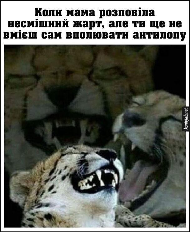 Мем про гепарда, який сміється. Коли мама розповіла несмішний жарт, але ти ще не вмієш сам вполювати антилопу