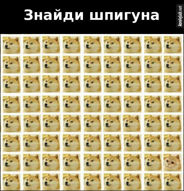 Знайди на фото кота. Знайди шпигуна. Серед багатьох фото собаки треба знайти одне фото кота
