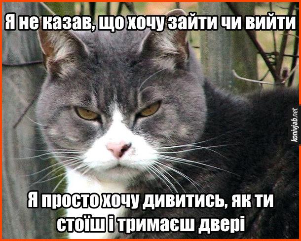 Мем Типовий кіт. Я не казав, що хочу зайти чи вийти. Я просто хочу дивитись, як ти стоїш і тримаєш двері