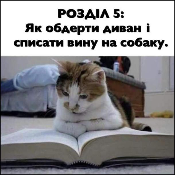 Кіт читає книжку - інструкцію. Розділ 5: Як обдерти диван і списати вину