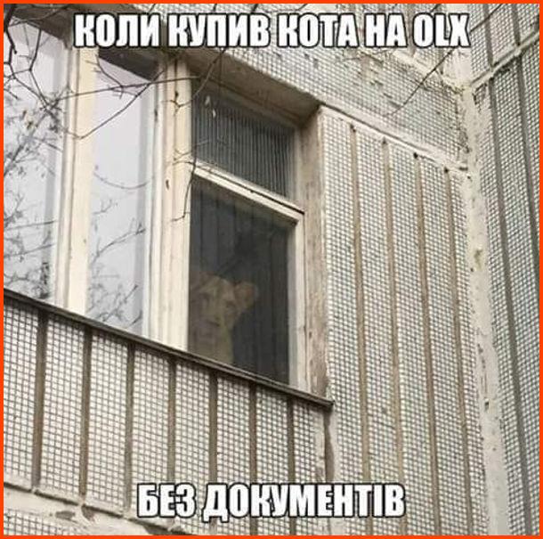 Прикол. Коли купив кота на OLX без документів. З вікна квартири виглядає лев