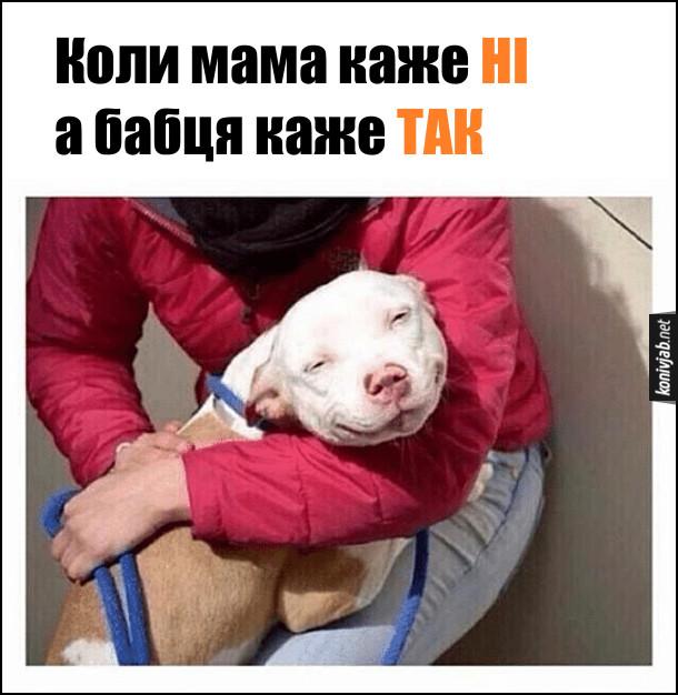 Жарт про маму і бабцю. Коли мама каже ні, а бабця каже так. На фото: Собака в обіймах дівчини хитро поглядає