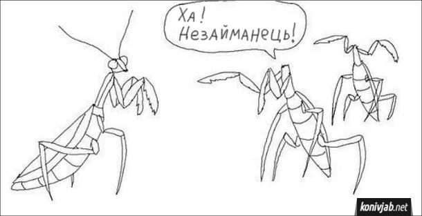 Смішний малюнок про богомолів. Безголові богомоли кепкують з богомола, що має голову: - Ха! Незайманець!