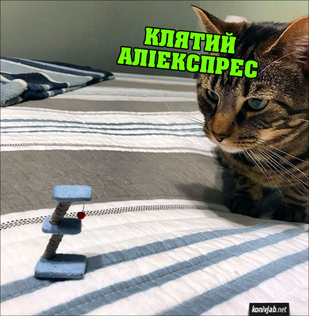 Прикол Товар з Аліекспрес. Кіт дивиться на маленьку мініатюрну котячу дряпалку і думає: - Клятий Аліекспрес я ж замовляв велику дряпатку