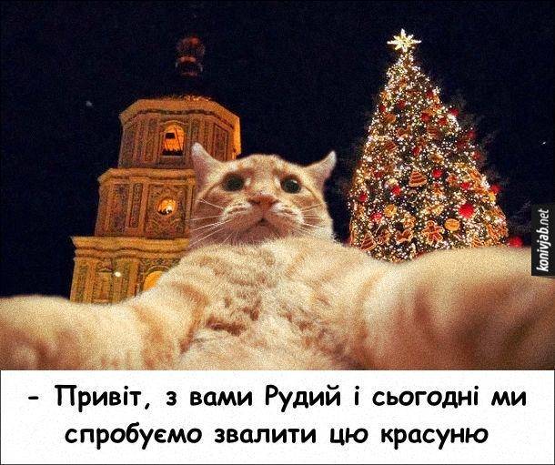 Прикол Кіт і ялинка. Кіт веде стрім з Софійської площі, де встановлена різдв'яна ялинка: - Привіт, з вами Рудий і сьогодні ми спробуємо звалити цю красуню
