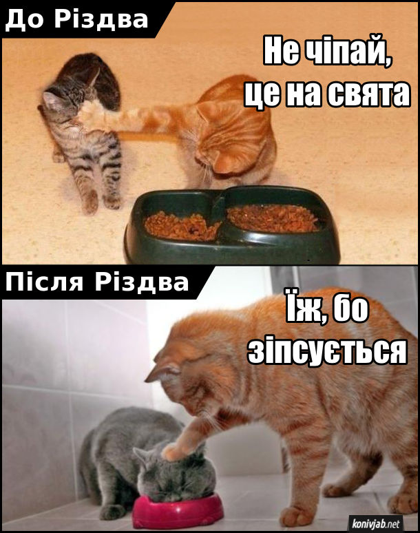 Прикол Їжа на Різдво. Два коти. До різдва один кіт не дає їсти іншому: - Не чіпай, це на свята. Після різдва кіт притискає лапою голову іншого кота в миску з їжею: - Їж, бо зіпсується