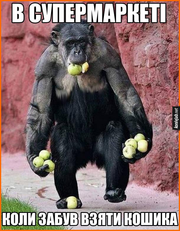 Прикол В супермаркеті, коли забув взяти кошика. Шимпанзе йде і несе яблука в роті, в обох руках і одній нозі