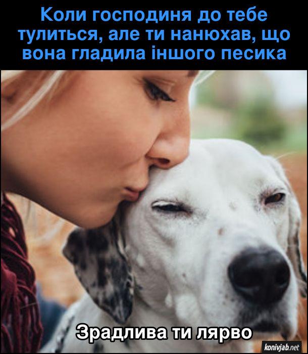 Мем ревнивий собака. Коли господиня до тебе тулиться, але ти нанюхав, що вона гладила іншого песика