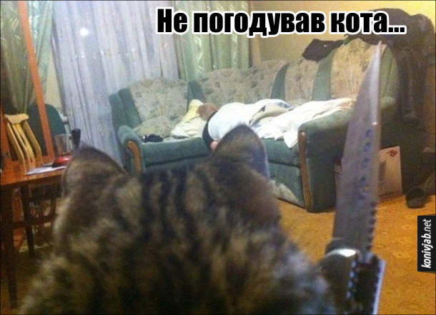Прикол. Не погодував кота, кіт з ножем підходить до господаря, що спить