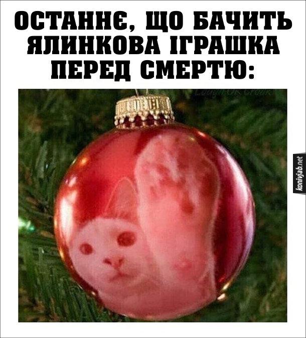 Кіт і ялинкова іграшка (прикраса). Останнє, що бачить ялинкова іграшка перед смертю. В іграшкі відображається кіт, який протягує до неї лапу (хоче розбити)
