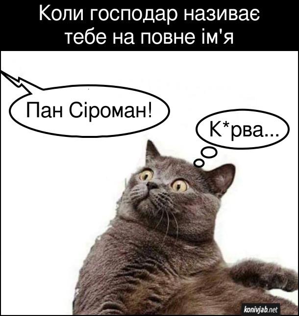 Прикол Кіт щось накоїв. Коли господар називає тебе на повне ім'я. Господар: Пан Сіроман! Кіт перелякано думає: - Курва...