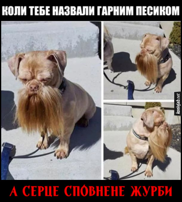 Прикол. Пес з вусами, неначе в Шевченка. Коли тебе назвали гарним песиком, а серце сповнене журби