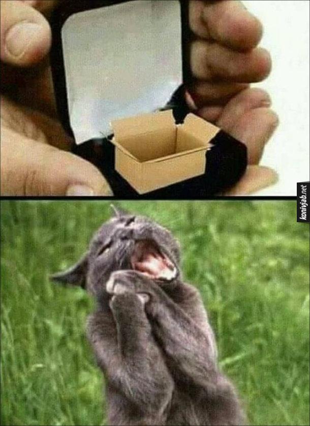 Прикол Кіт і коробка. Чоловік відкриває футляр, в якому замість обручки маленька коробка. Кішка в захваті