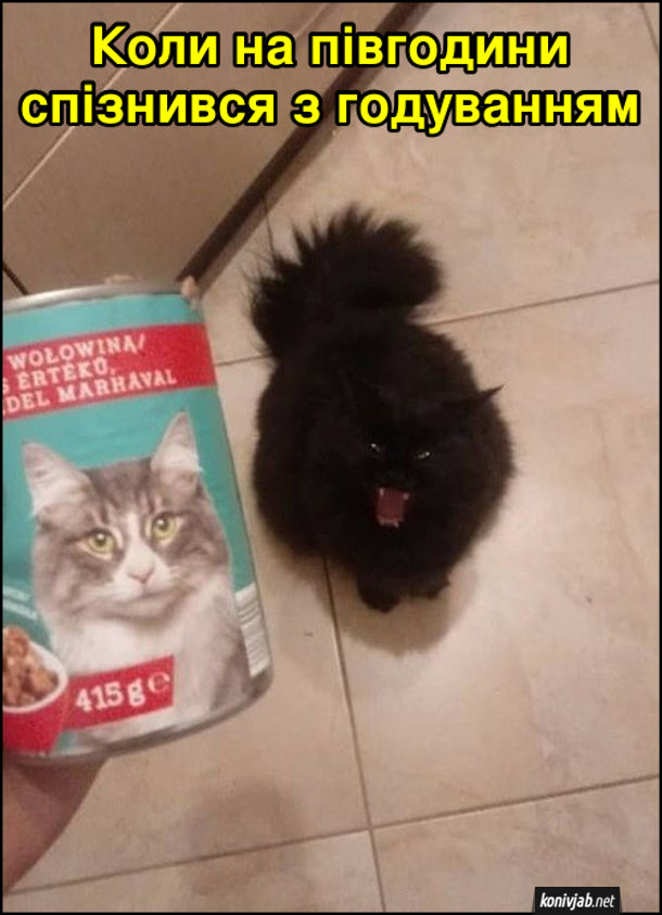 Прикол Кіт голодний. Коли на півгодини спізнився з годуванням, а кіт вже лютує