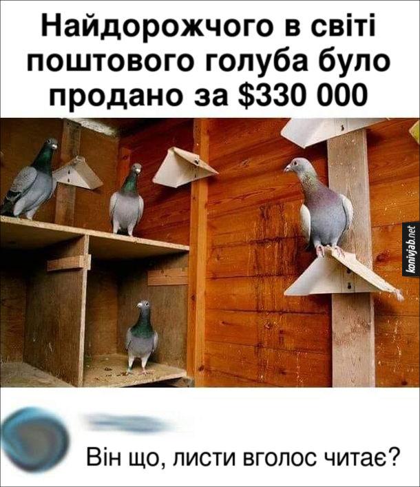 Прикол. Найдорожчий поштовий голуб. Найдорожчого в світі поштового голуба було продано за $330 000. Коментар: Він що, листи вголос читає?