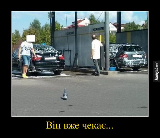 Демотиватор Голуб. Біля автомийки стоїть голуб. Він вже чекає... (щоб напаскудити на помиту машину)