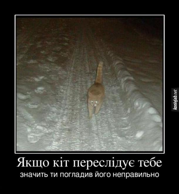 Демотиватор Кіт. Якщо кіт переслідує тебе, значить ти погладив його неправильно