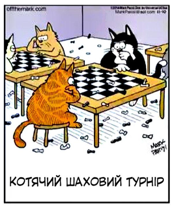 Смішний малюнок Коти грають в шахи - скидають шахи на підлогу
