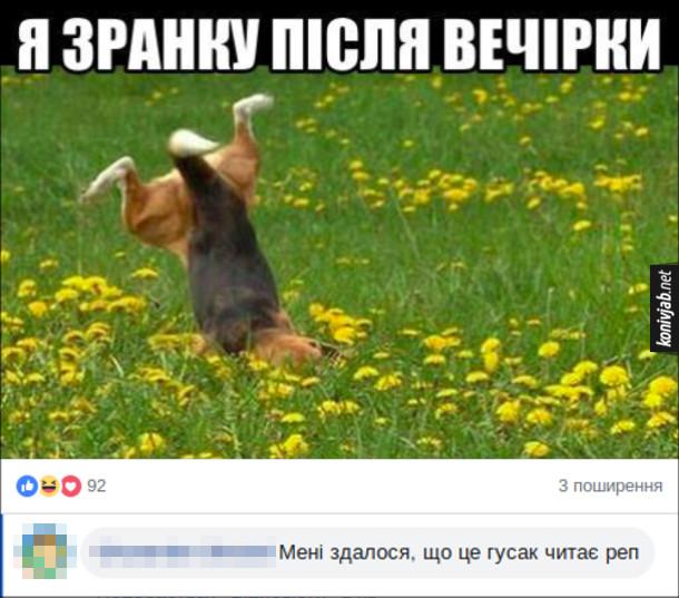 """Смішний комент під фоткою. Зображений мем """"Я зранку після вечірки"""" і фото, де собака впала в траві і задерла задні лапи догори. Коментар: Мені здалося, що це гусак читає реп"""