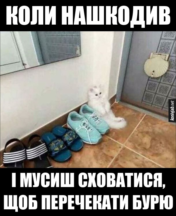 Жарт Кошеня сидить поміж взуття. Коли нашкодив і мусиш сховатися, щоб перечекати бурю