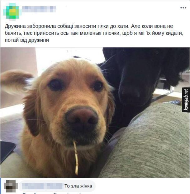 Смішний пост про собаку. Дружина заборонила собаці заносити гілки до хати. Але коли вона не бачить, пес приносить ось такі маленькі гілочки, щоб я міг їх йому кидати, потай від дружини. Коментар: То зла жінка