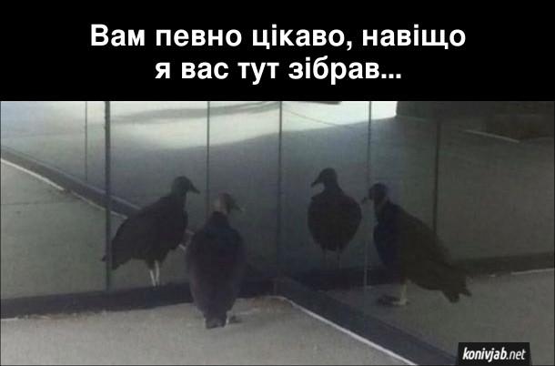 Прикол Птах перед дзеркалом. Птах підійшов до дзеркального кута в приміщенні і каже до трьох своїх відображень: - Вам певно цікаво, навіщо я вас тут зібрав...