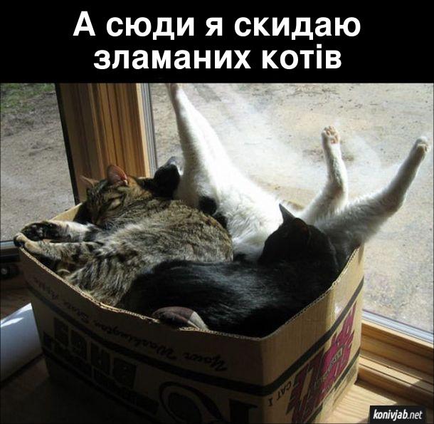 Смішна картинка Коти в коробці. А сюди я скидаю зламаних котів