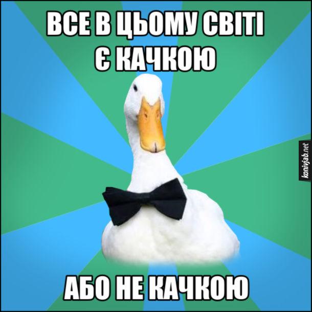 Мем Качка. Все в цьому світі є качкою. Або не качкою